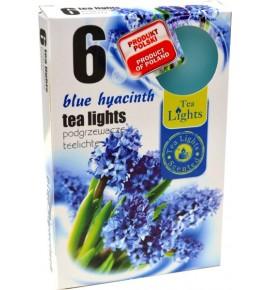 BLUE HIACYNT - 6szt.
